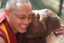 A Buddhist monk and his goat